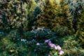 Ботанический сад — зеленая жемчужина Кенигсберга